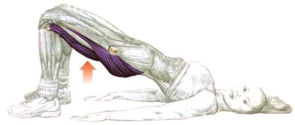 Pont fessier ou élévation du bassin - exercice pour les fesses